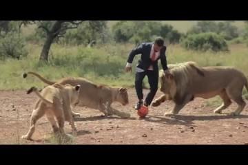 Gioca a calcio con i leoni