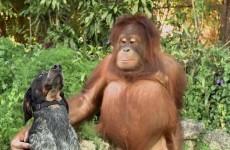 Amicizie incredibili tra Animali