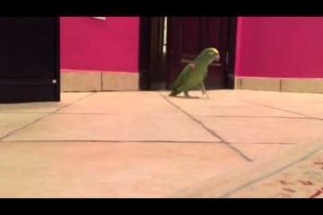 Il pappagallo malefico