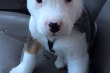 La reazione di un cucciolo al suo primo singhiozzo