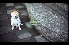 Abbandona il Cane: la commovente reazione del cucciolo