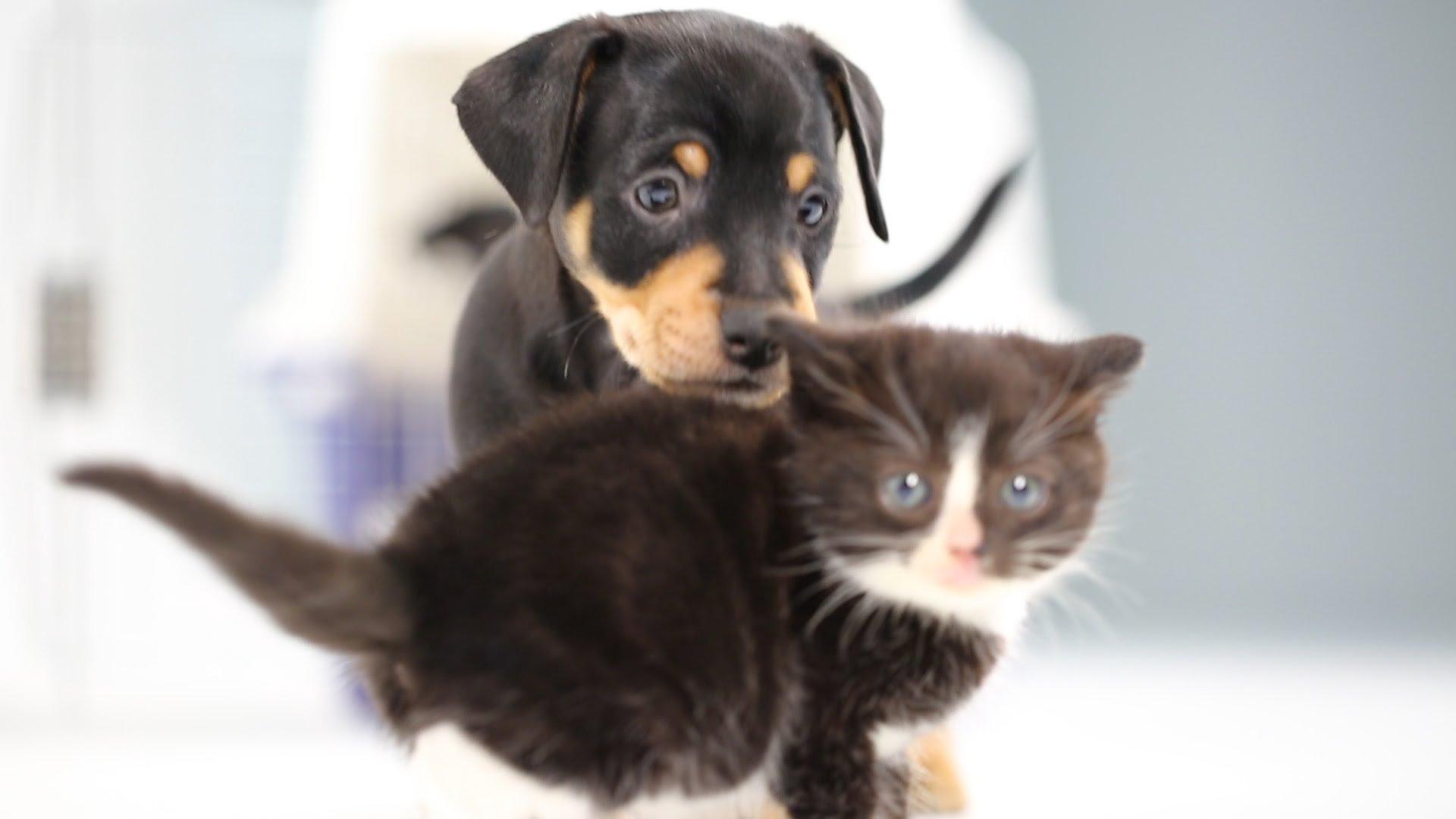 Populaire Cuccioli di cane e di gatto si incontrano per la prima volta DL81