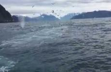 Incredibile incontro ravvicinato con un branco di balene