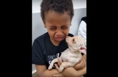 cucciolo-in-regalo