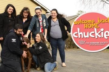 Labrador Rubato ritrova la sua Famiglia dopo 5 anni