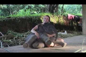 L'Elefantino si comporta come un cucciolo di cane
