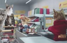 Gattini al Supermercato: lo spot tedesco fa impazzire il web