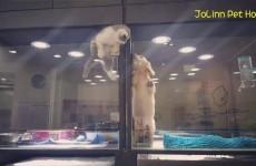 Gattino in Fuga: vuole Raggiungere il suo Migliore Amico. Ci riuscirà?