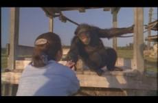 Scimpanzè incontra la donna che lo ha salvato 20 anni fa