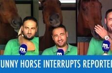 Il Reporter alle prese con un Cavallo spassosissimo!