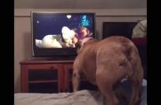 Bulldog guarda un Film Horror: la sua reazione è Sorprendente!