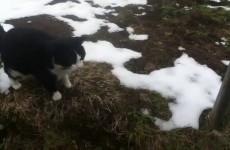 Sciatore si perde in Montagna, un Gatto gli mostra la strada