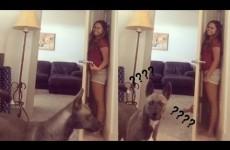 Gioca A Nascondino con il Cane: il risultato è Esilarante!