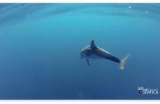 Cala Luna: la rotta dei delfini