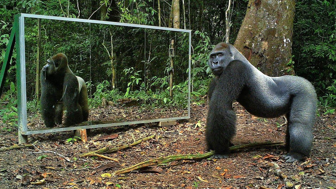 Animali della giungla allo specchio video - Cane allo specchio ...